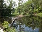 Size-able Beaver Dam