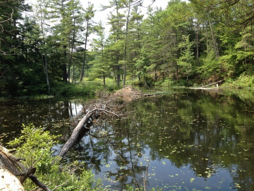 Size-able Beaver Dam