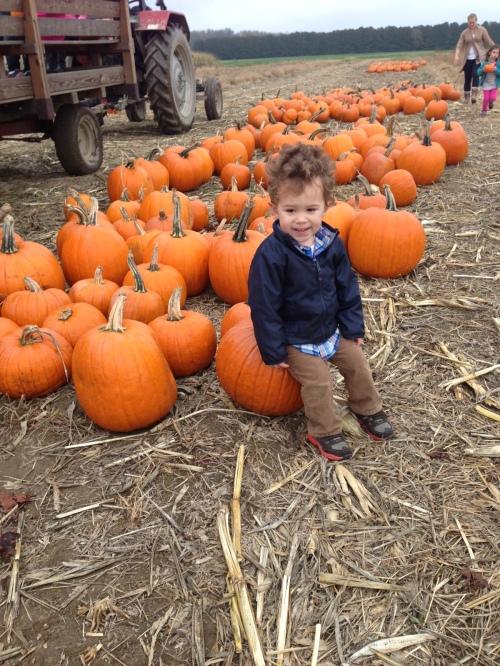 Pre-picked pumpkins