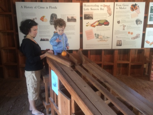 An ingenious invention, this orange sorter was a quick way to sort oranges according to size. Alex was enthralled by it...